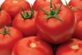 Завдяки подовженому обороту фермер отримує до 8,5 кг томатів з куща