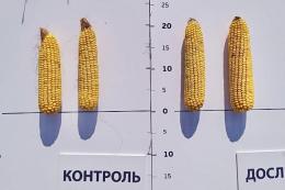 Застосування гуматів компанії HuminTech дозволяє отримати додаткові прирости урожайності на 8-30%