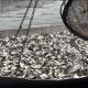 У водойми Харківщини випустили понад 8 тонн риби