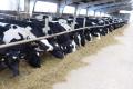 «Фаворит К.І.М.» за кілька років збільшив надої молока у 2,5 раза