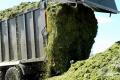 Напівпричіп «Атлант» вміщає вдвічі більше зеленої маси за самоскидні машини