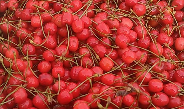 З'явилася черешня, полуниця упала в ціні, овочі дешевшають