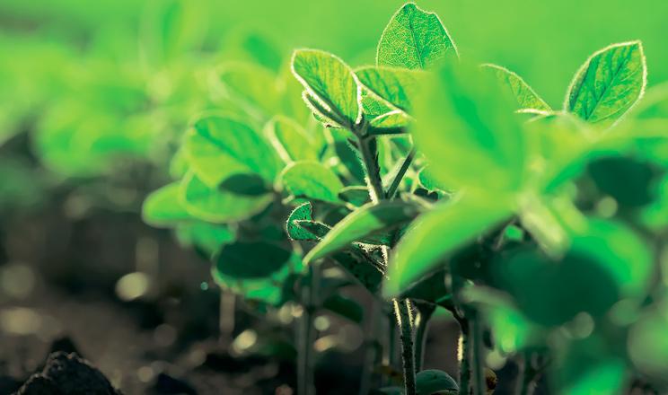 Новий гербіцид ПЕТРА™ – на варті посівів сої