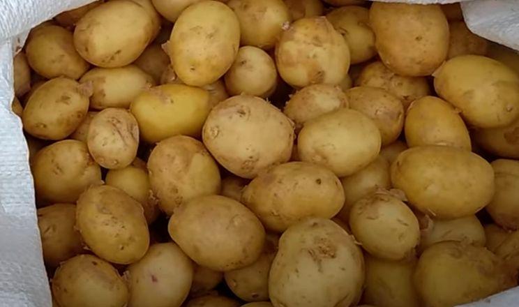 На півдні виробники молодої картоплі не можуть продати свій урожай