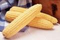 Фермери не змогли продати солодку кукурудзу