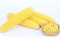 У «Консерваторії» солодку кукурудзу для консервації вирощують конвеєром
