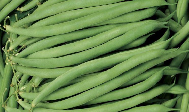 Фермери вирощують 5% спаржевої квасолі
