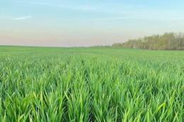 Agricom Group завершив першу обробку озимих у Житомирському кластері