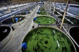 В Україні триває опитування, як зміни клімату впливають на аквакультуру
