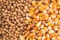 Bayer вивела понад 430 нових гібридів кукурудзи, сої, бавовни та овочів