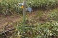 Тензіометричні системи дозволяють підвищити врожайність на 20-30%