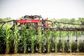 Із системою Y-DROP урожайність кукурудзи зросла на 1 т/га, – досвід