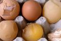 Як склад раціону курей впливає на якість шкаралупи яєць