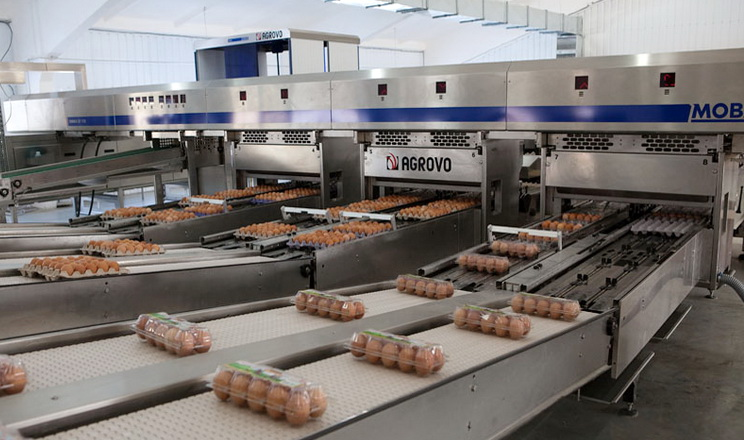 Виробництво яєць з початку року скоротилося на 13,8%