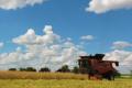В Agricom Group спрогнозували ціну за гектар після відкриття ринку землі