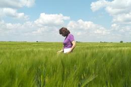На Кіровоградщині стартувала перевірка насінницьких посівів зернових