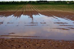 Дощі завадили завершенню посівної на частині площ на Житомирщині