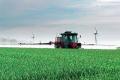 Алгоритм підживлення озимої пшениці азотом залежить від двох чинників