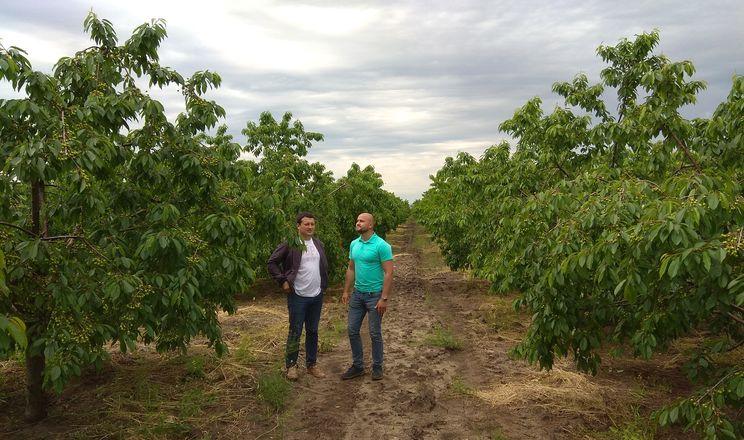 Садівники Одещини оцінили ефективність нового органосиліконового ад'юванту