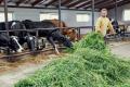 У травні з'явилося 8 сімейних молочних ферм