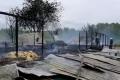 На Київщині під час пожежі загинуло 2 тис. курей