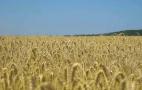 Астарта-Київ контролює логістику продукції ІТ-рішеннями AgriChain