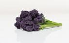 Інноваційний гібрид капусти броколі має фіолетові суцвіття