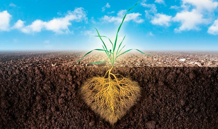 Потужна коренева система — ваші інвестиції в майбутнє