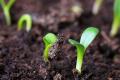 Деструктори для точного землеробства представлять на вебінарі