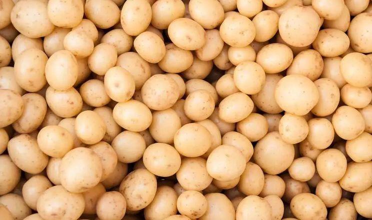 «Контінентал Фармерз Груп» передбачає потужності для мийки картоплі