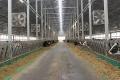 Агрофірма «Пісчанська» цього року планує завершити будівництво тваринницького комплексу