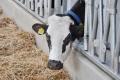 Villa Milk заготовляє сінаж і силос на власних полях