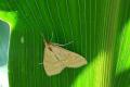 На Кіровоградщині розпочався літ і яйцекладка комах-шкідників