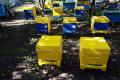 На Луганщині в аграрному ліцеї створили навчальну пасіку