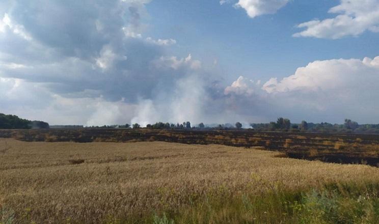 На Чернігівщині згоріло 55 га посівів пшениці
