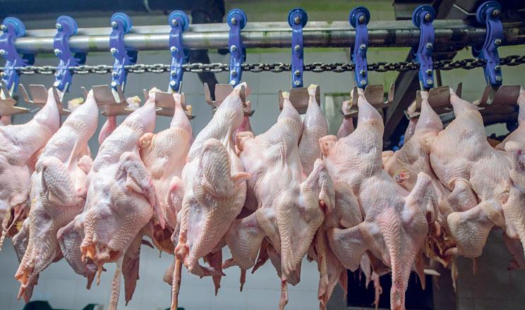 Світовий ринок м'яса птиці