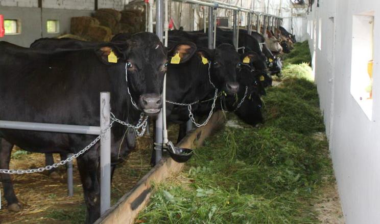 Проєкт «Сімейні молочні ферми» став учасником IFCN