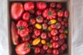 Прибутковість овочів залежить далеко не тільки від культури, – фермерка