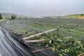 Негода в Німеччині, Швейцарії, Австрії, та Бенілюксі знищила деякі сади