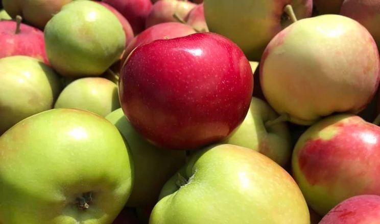 В Україні почали збирати ранні яблука