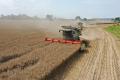 Україна зібрала рекордний врожай ранніх зернових