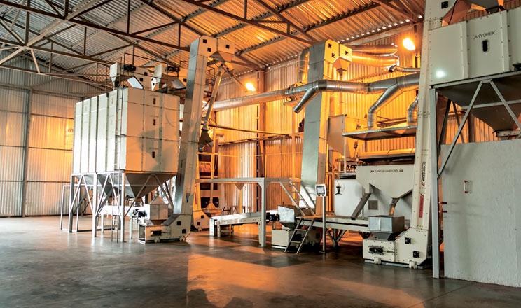 Модернізація насіннєвого заводу ТОВ «Агро-Форте»: вектор на якість