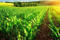 Інноваційна платформа розпізнає 21 вид шкідників кукурудзи