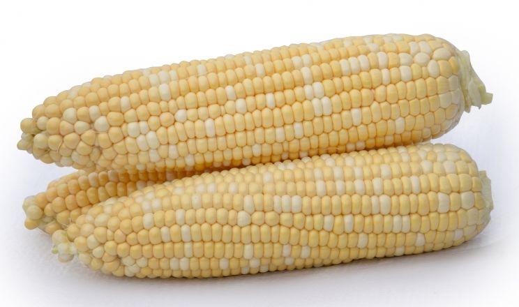 Цукрова кукурудза більш уразлива до шкідників