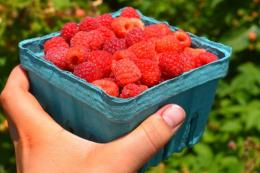 Польські фермери запрошують на самозбір ягід, фруктів та овочів