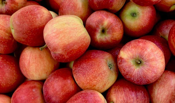 Експерт спрогнозував ціну яблук