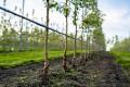 Суперсорбенти підняли вологість ґрунту під яблунями на 120%, –  дослідження