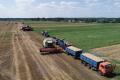 «МХП-Баффало» завершив жнива ранніх зернових