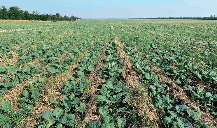 Агрофірма «Перлина Поділля» випробувала на своїх полях посівний комплекс MZURI Pro-Til 6Т