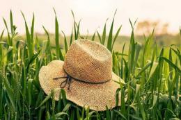 Підписано закон щодо стимулювання діяльності фермерських господарств